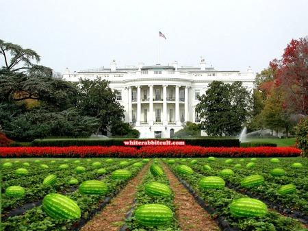 white-house-rose-garden1